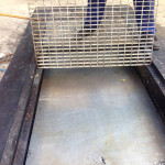 Grease trap after successful clean